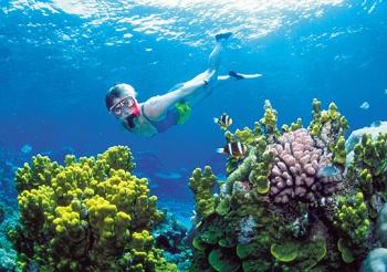 Одно из чудес природы – Большой Барьерный риф