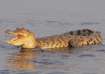 Национальный парк Какаду и река аллигаторов