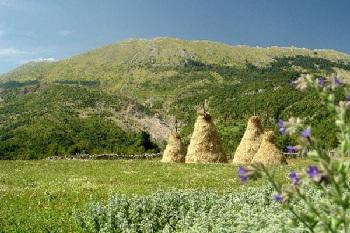 Природа Албании разнообразна