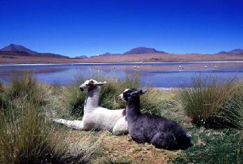 Боливия находится в самом центре континента Южная Америка