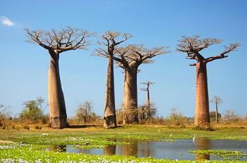 Ландшафт Мадагаскара разнообразен