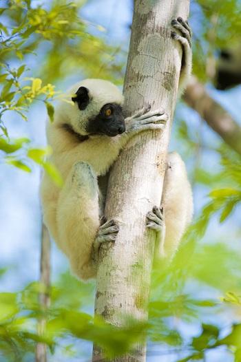 Лес Киринди - излюбленное место обитания лемуров и не только