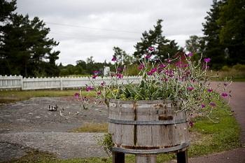 на одной ферме под названием «Tjudo» из яблок делают вино