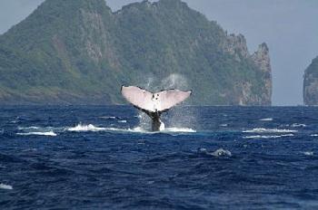 Леоне, где проживают настоящие китобои