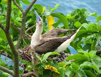 Национальный парк Американского Самоа
