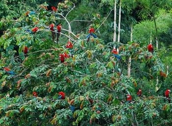 В лесах Амазонки