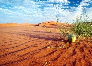 Область Намиб
