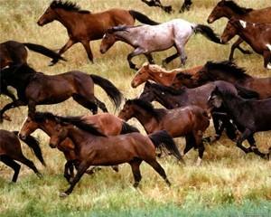 Табун лошадей в монгольской степи