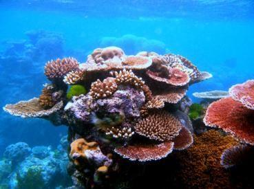 Кораллы в большом барьерном рифе