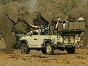 Для тех, кому безобидное созерцание слонов и носорогов кажется скучным занятием, предлагается сафари – охота