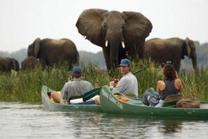 Африка – родина различных экзотических животных