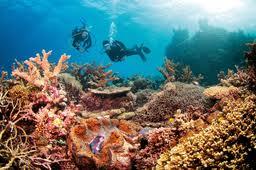 Большой Барьерный риф возле берегов Австралии