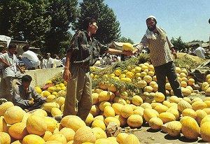 В дыне больше, чем в других бахчевых культурах, витамина С