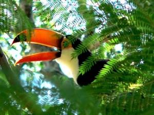 В Национальном парке Амборо обитает 812 видов птиц