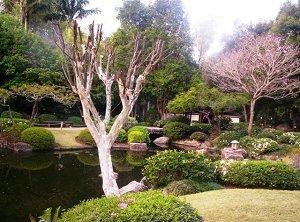 Ботанический сад Горы Coot-tha
