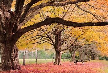 Таким цветочным великолепием, встречает отдыхающих Брисбен