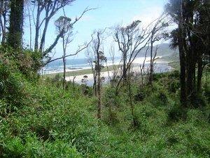 Вальдивские леса на острове Чилоэ