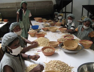 Важными товарными культурами являются хлопчатник, сахарный тростник, арахис, кунжут и бутироспермум