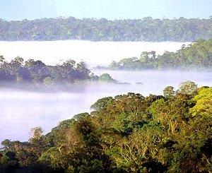 тропические леса в бассейне Амазонки