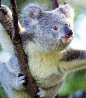 Парк Диких Животных Австралии
