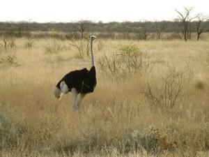 Среди местных ландшафтов велико число представителей животного мира