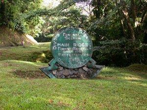 Лесной заповедник Тобаго занимает северо-восточный регион одноимённого острова