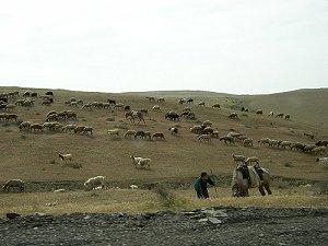 в степном Азербайджане