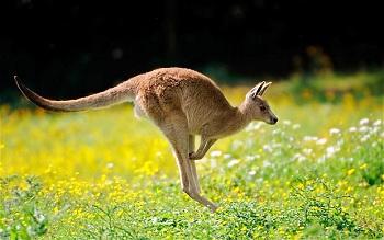 Уникальные представители фауны зеленого континента собраны в многочисленных зоопарках и природных заповедниках