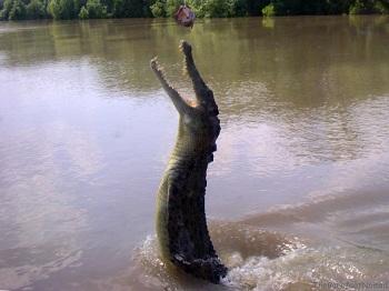 охота на крокодилов в Австралии