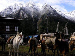 Лайа-это удивительная деревня, которая находится в самой северной точке Бутана