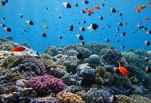 коралловые рифы Арубы