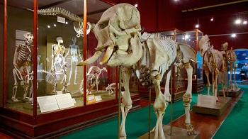 В музее есть так же потрясающая возможность увидеть все экспонаты в интерактивной форме