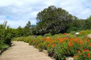 В Кейптауне обязательно стоит посетить ботанические сады Кирстенбош