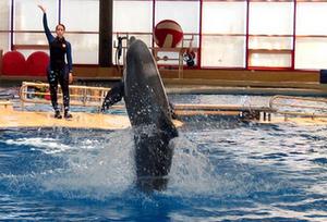 Интерактивный дельфинарий это не обычный бассейн с дельфинами, которые показывают номера вместе с тренером