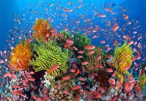 Коралы и рыбы большого барьерного рифа