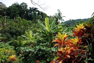 Буйство тропической природы