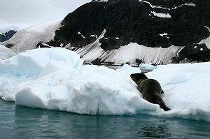 Антарктида наполняется новыми существами