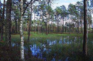 Вируское болото