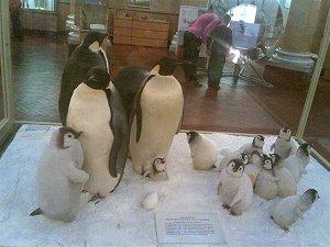 «Музей Арктики и Антарктики»