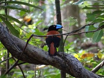 Знакомство лучше всего начать с национального парка Масоала