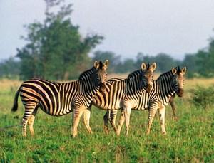 Парк входит в первую десятку лучших национальных парков в мире