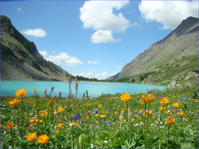 Алтай - Золотые горы