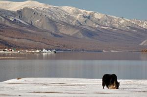 Богатство и красота аймага Хубсугул не только в озере