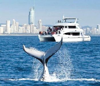 круиз по наблюдению за китами