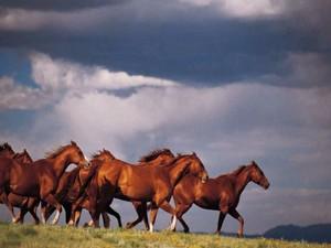 Лошадь в Монголии – национальное достояние