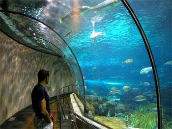 Аквариум Западной Австралии