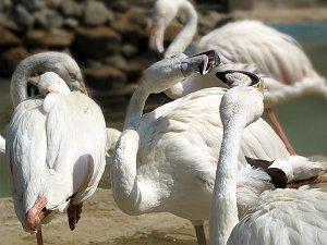 Животный мир Азербайджана