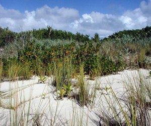 Растительность Ангильи