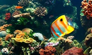 Представительство флоры и фауны рифа, во многом уникально