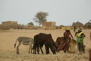 Обрабатываемые земли занимают 22% территории, луга и пастбища — 23%